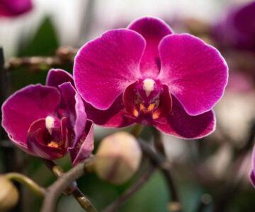 Hogar Plantas Orquídeas