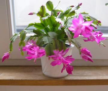 Consejos para que nuestras plantas no se congelen en el - Plantas para salon ...