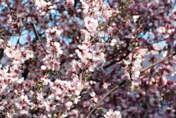Primavera en Tesino