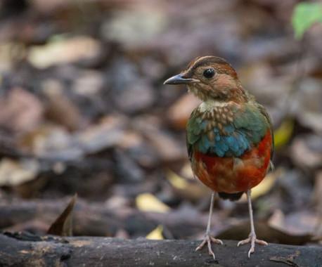 El-pajaro-que-resulto-ser-doce-especies-en-una_image_380
