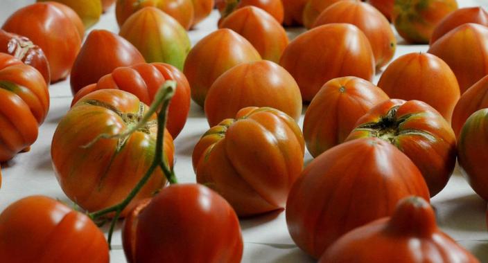 tomate-sabor_image_380