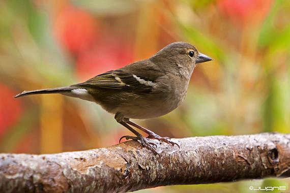 Que-aves-europeas-son-mas-vulnerables-a-la-extincion_image_380
