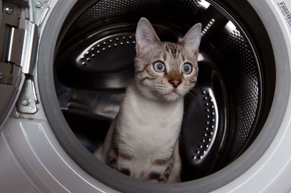 Los-peligros-que-acechan-al-gato-en-casa