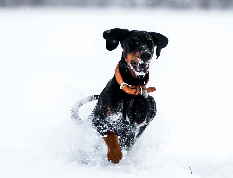 Perros-y-gatos-precisan-entretenimiento-invernal