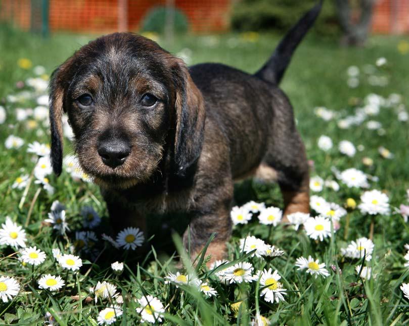 cepillados-perros