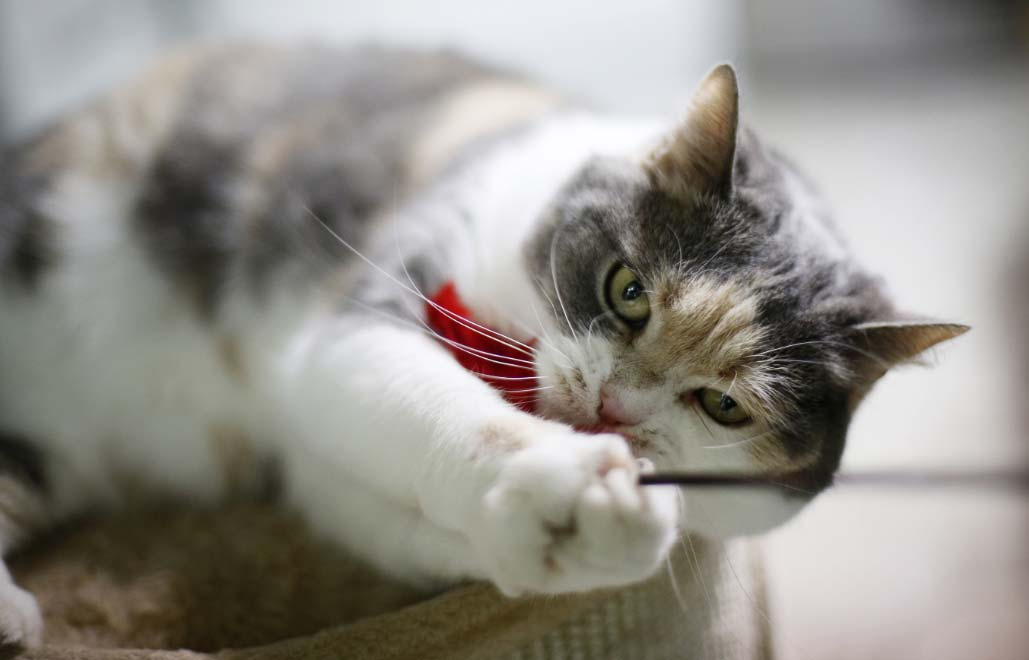 gato-hipo