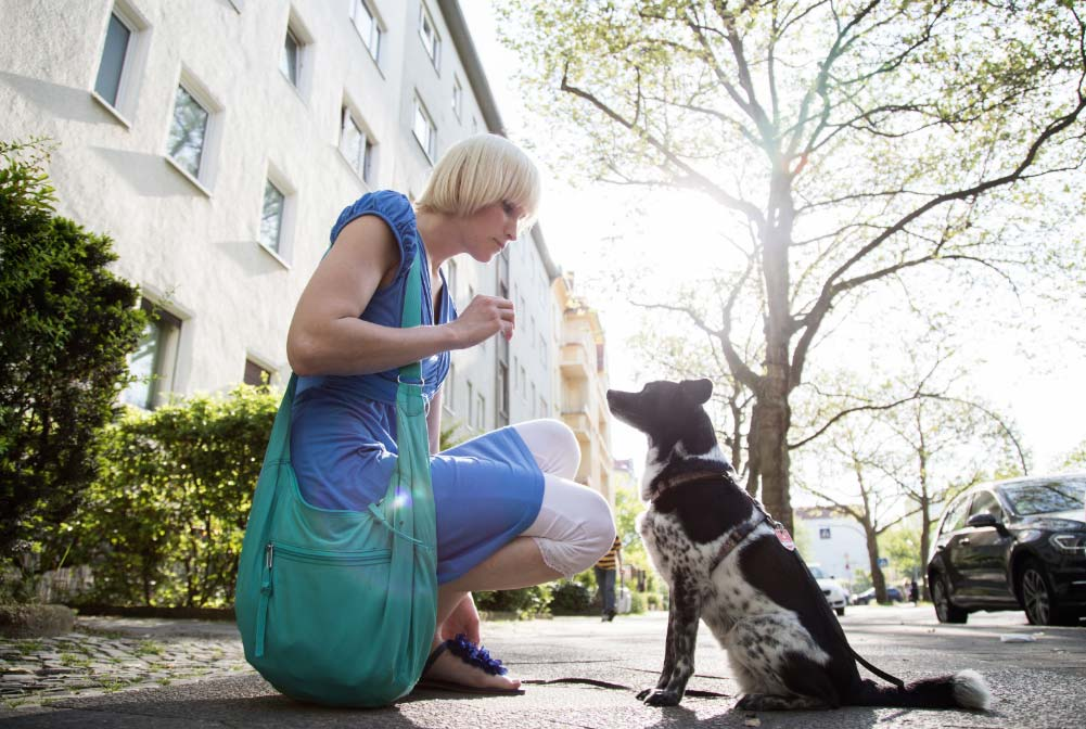 tratar-mascotas