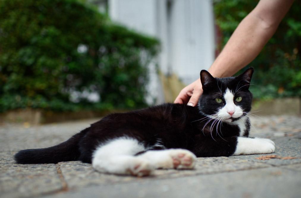 gatos-mascotas-dpa