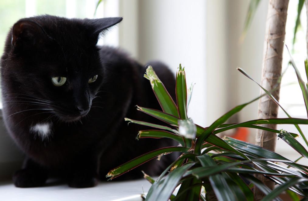 gatos-y-plantas
