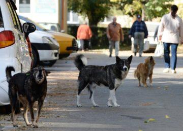 Mascotas Perros callejeros
