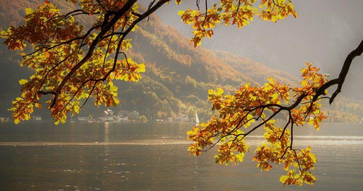 autumn-4465774_960_720