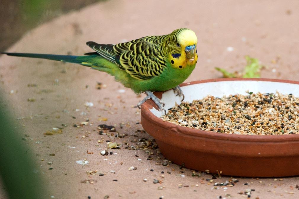 Algunas aves requieren alimentos de alta calidad nutritiva. Foto: Andrea Warnecke/dpa-tmn
