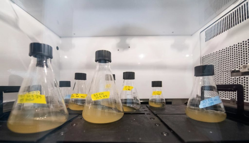 Los pistones con soluciones de levadura son agitados en una incubadora para que se multipliquen las células con hebras de ADN. Foto: Sebastian Gollnow/dpa