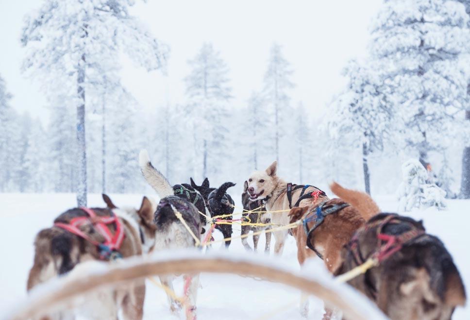 En la zona de esquí sueca Sälen los huéspedes pueden ir hasta el hotel en un trineo tirado por perros. Foto: PeakPoint Adventure/dpa-tmn