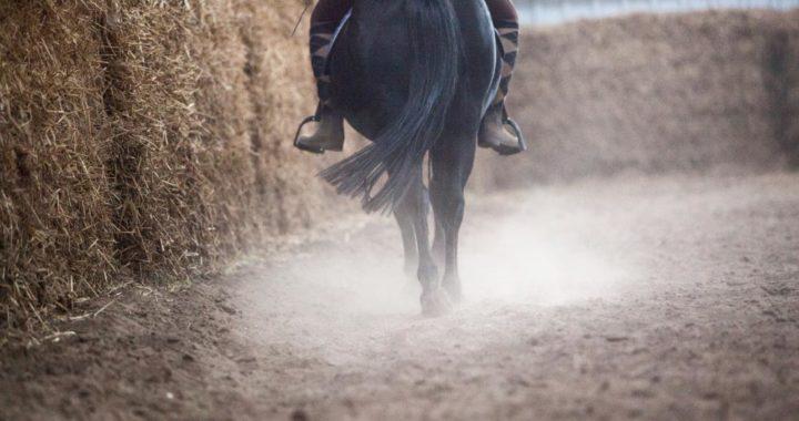 Cuando un caballo tiene sobrepeso, no debe ser cargado de más. Foto: Christin Klose/dpa-tmn