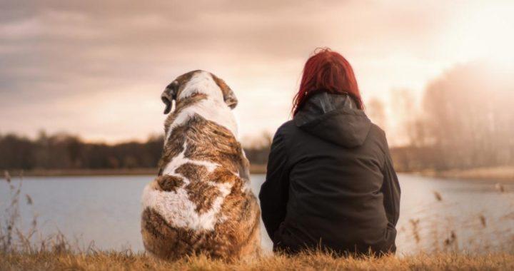 cuidados-para-perros