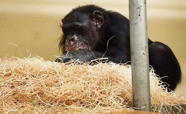 Foto: Hella Hellmann/Zoo Krefeld/dpa