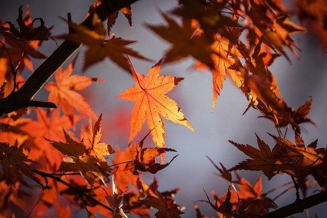 autumn-leaves-1415541_640