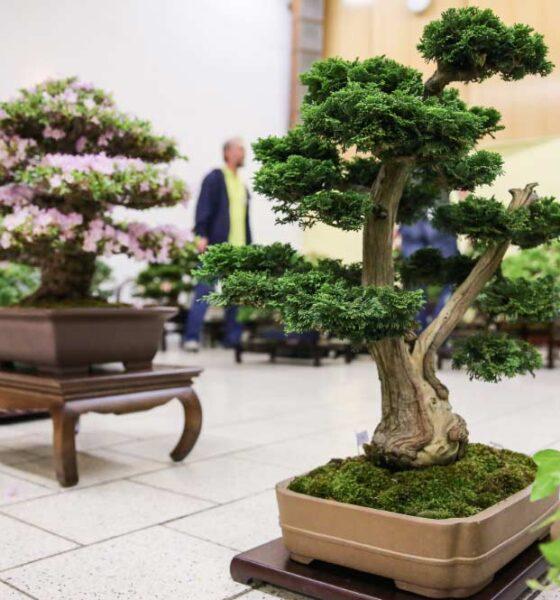 cultivar un bonsái