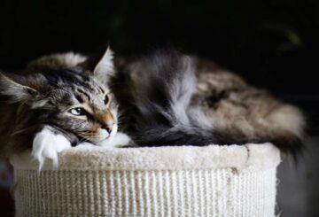 Animales Salud Mascotas Gatos