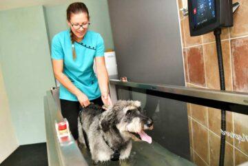 Animales Salud Mascotas